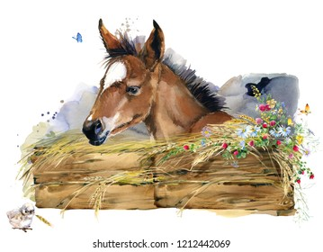 farms animal set. Cute domestic pets watercolor illustration. foal illustration. little horse