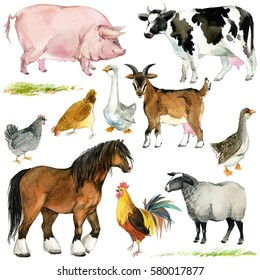 farms animal set. Cute domestic pets watercolor illustration. horse. goose. pig. goat. rooster. chicken. sheep. cow