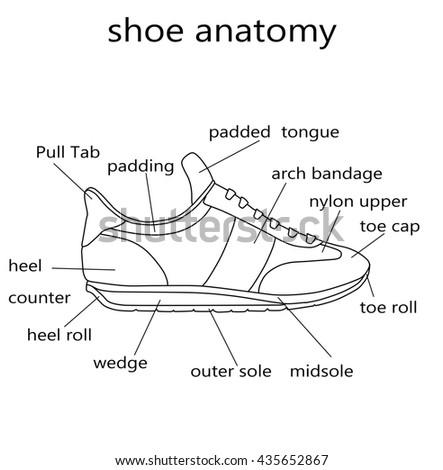 Fashion Illustration Raster Illustration Anatomy Shoe Stock