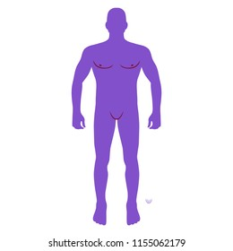 Fashion man body full length front view bald template figure, illustration isolated on white background