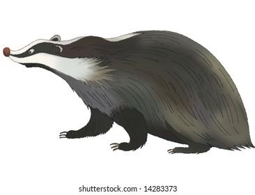 fat black badger  on a white background