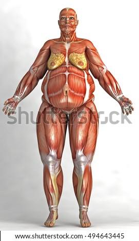 Fat Render Woman Skin Shape Anatomical Stock Illustration 494643445 ...