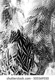 Feather texture print,wings texture print,reflected.