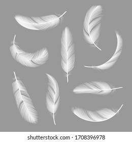 Feathers realistic. Flying furry weightless white swan objects isolated on dark background