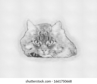 Black Cat Isolated Hand Drawn Modern Images Stock Photos Vectors Shutterstock