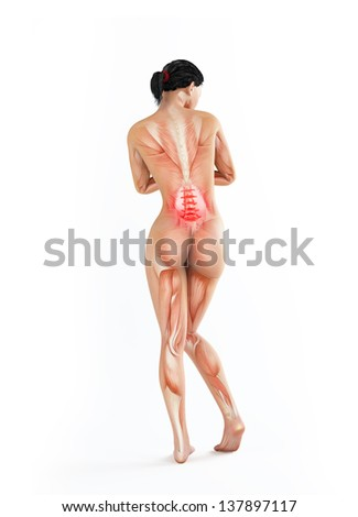 Female Anatomy Illustration Lower Back Ache Stock Illustration