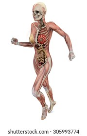 Female body with skeletal muscles and organs