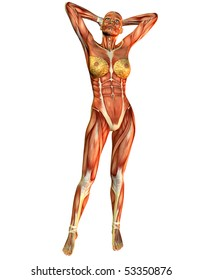 female muscle in the course of a standing pose