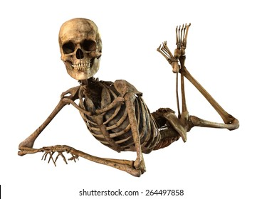 female skeleton with detailed anatomy organs seperated on white background