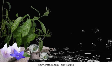 Feng shui picture with orange tree, flowers, stones and water. 3d illustration on black background