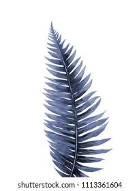 Fern leaf. Watercolour illustration on white.