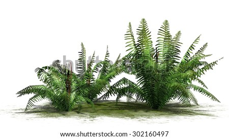 fern plants - separated on white background