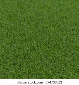 Fescue Grass field. 3D illustration