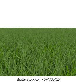 Fescue Grass field over white. 3D illustration