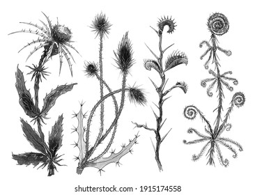 fictional four plants with thorns