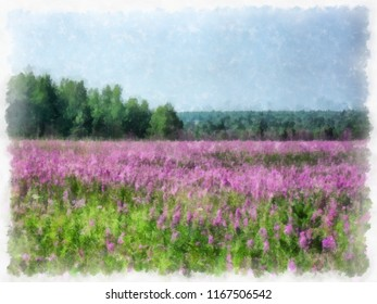 A field with bright pink flowers on a bright day. Watercolor. Digital painting