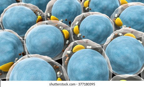 field of fat cells, High quality 3d render of fat cells, cholesterol in a cells, field of cells, structure of the molecule, receptors on the cells surface