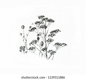 Field grasses, hand drawn sketch of wild herbs isolated on white background.