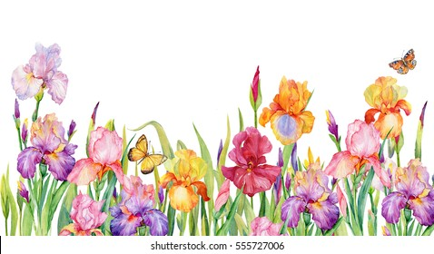 field of iris flowers. beautiful floral background of pink,yellow,purple irises and butterflies.Watercolor illustration for design cards,websites,banners.