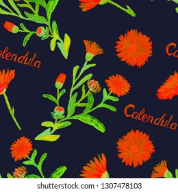Field marigold (Calendula arvensis)  flowers, hand painted watercolor illustration with inscription, seamless pattern design on dark blue background