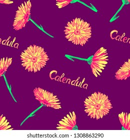 Field marigold (Calendula arvensis)  flowers, hand painted watercolor illustration with inscription, seamless pattern design on dark purple background
