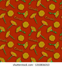 Field marigold (Calendula arvensis)  flowers, hand painted watercolor illustration with inscription, seamless pattern design on dark red background