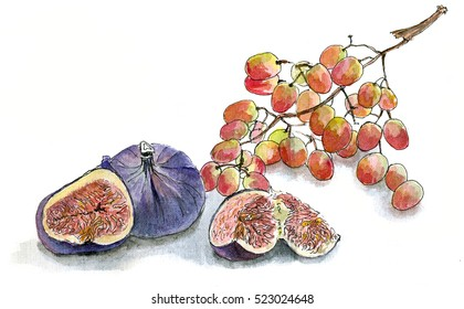 Figs and grapes, watercolor sketch hand draw on white background