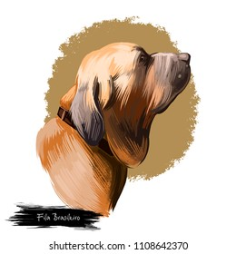 Fila Brasileiro, Brazilian Mastiff, Cao de fila brasileiro dog digital art illustration isolated on white background. Brazil origin guardian dog. Cute pet hand drawn portrait. Graphic clip art design