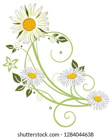 Filigree tendril with Marguerites, daisies, flowers and leaves. Summery meadow flower. Green and white.
