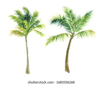 finished image of two palm trees on a white background, watercolor