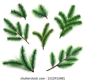 Fir branches. Christmas tree branching isolated. 3d realistic conifer branch set for winter holiday decoration. collection