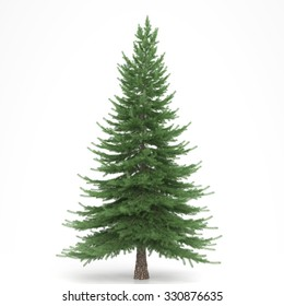 Fir tree isolated