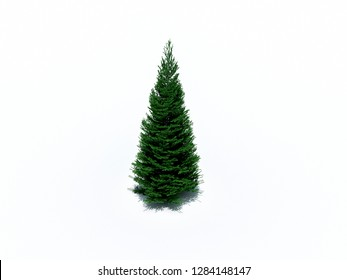 fir tree on white background 3D illustration