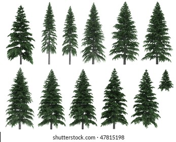 Fir trees isolated on white background