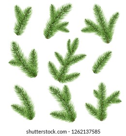 Fir-tree Branch Isolated
