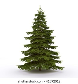Firtree on the white background