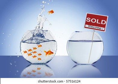 Fish in an aquarium with water and a sign. The concept of real estate