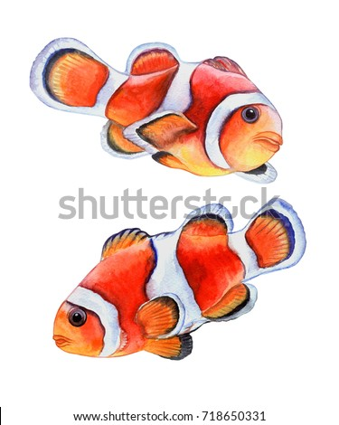 fish clown isolated on white background stock illustration 718650331