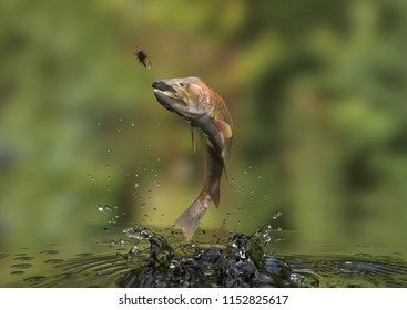 Fish in freshwater river is out to catch bait with fishing line 3d rendering