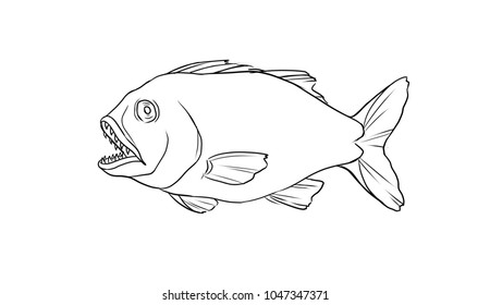 Fish outline on white background