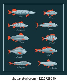 Fish, seafood isolated set. Sea and ocean fish vector icon set of pike,pike perch,trout,dorado,sturgeon,tuna,carp,perch,cod,herring. Мarine animal species for fish market design. Restaurant menu