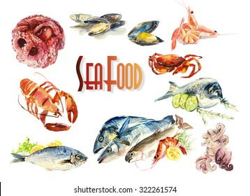 Fish and seafood. Menu. Different compositions. Watercolor hand drawn illustration