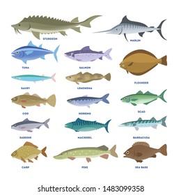 Fish set. Collection of aquatic fauna. Sturgeon and carp, pike and tuna. Underwater creature.
