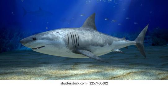 Fish Shark underwater in the blue ocean. 3d illustration.