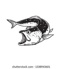 fish sketch illustration