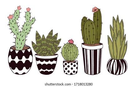 Five cute cacti in pots