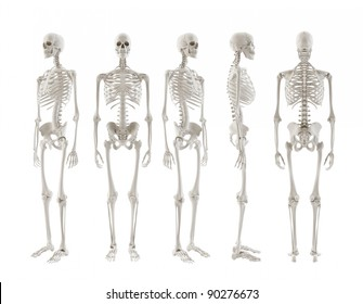 five Skeletons turnaround isolated on white background