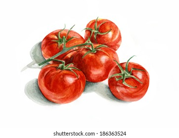 Five tomatoes on a branch. Watercolor painting on white background