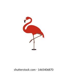 flaminggo bird icon - vector flaminggo sign - illustration of a bird, standing in water