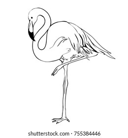 Continuous Line Drawing Bird Pink Flamingo Stock Vector Royalty